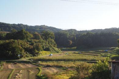 収穫を終えた田んぼが広がります