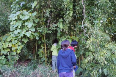 竹藪の中に入ってみました